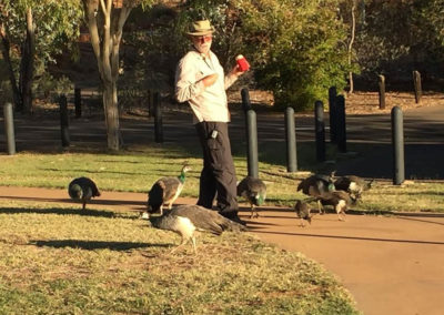 A goose surrounded by peacocks — at Lake Moondarra, Qld